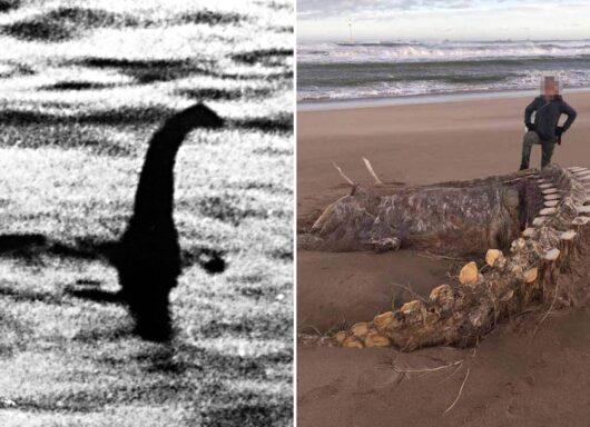Il mostro di Loch Ness esiste? Le scoperte grazie al test del DNA