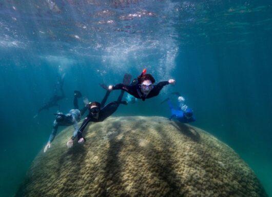 Muga dhambi: scoperto il corallo gigante nella Grande barriera corallina