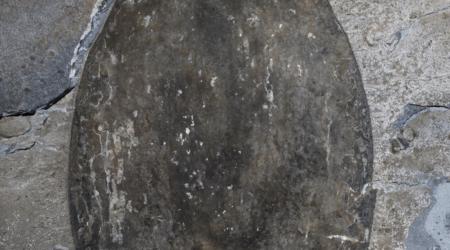 Trovato l'enorme fossile marino vissuto oltre 500 milioni di anni fa