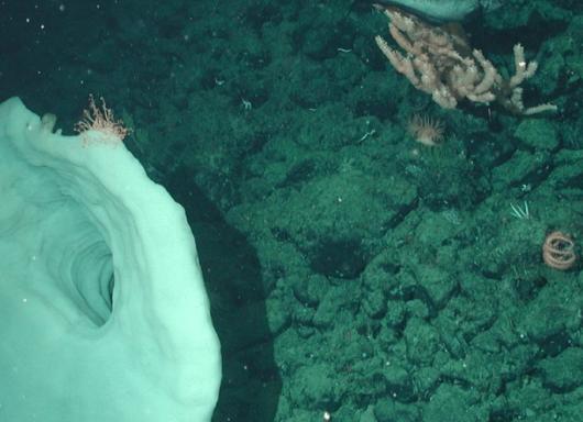 Estrazione mineraria nelle profondità oceaniche: l'allarme dei ricercatori